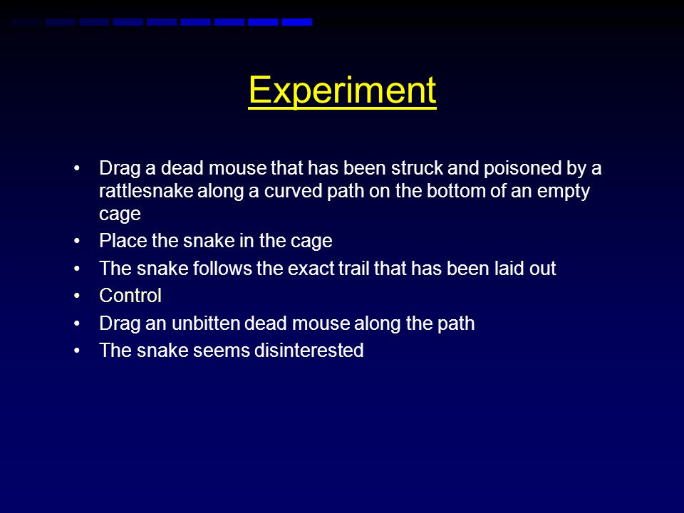 Experiment Drag a dead mouse that has been struck and poisoned by a rattlesnake along a curved path on the bottom of an empty cage.