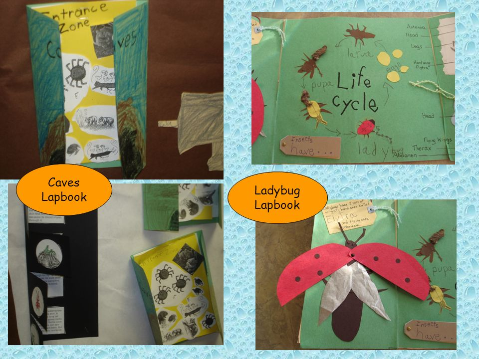 Caves Lapbook Ladybug Lapbook