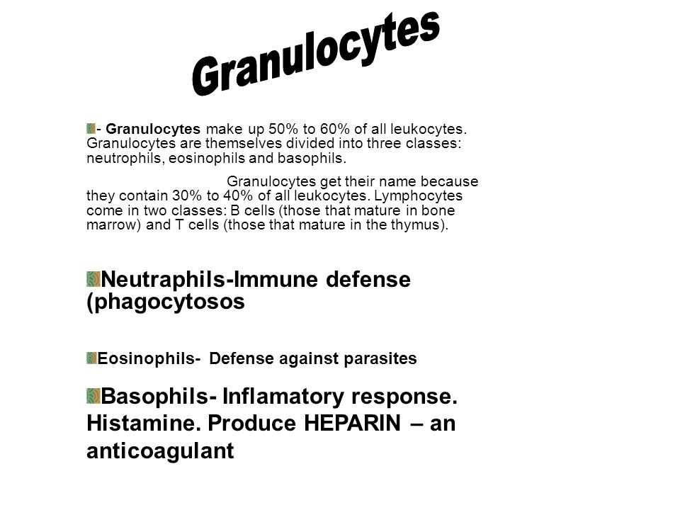 Granulocytes Neutraphils-Immune defense (phagocytosos