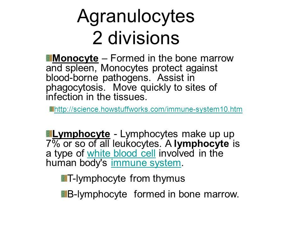 Agranulocytes 2 divisions
