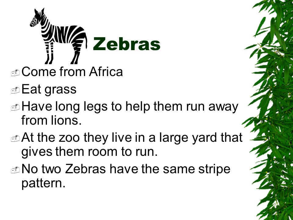 Zebras Come from Africa Eat grass