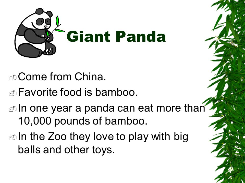 Giant Panda Come from China. Favorite food is bamboo.