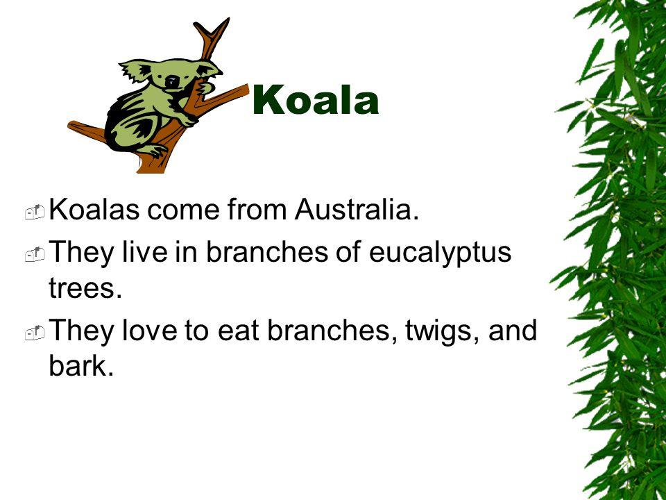 Koala Koalas come from Australia.