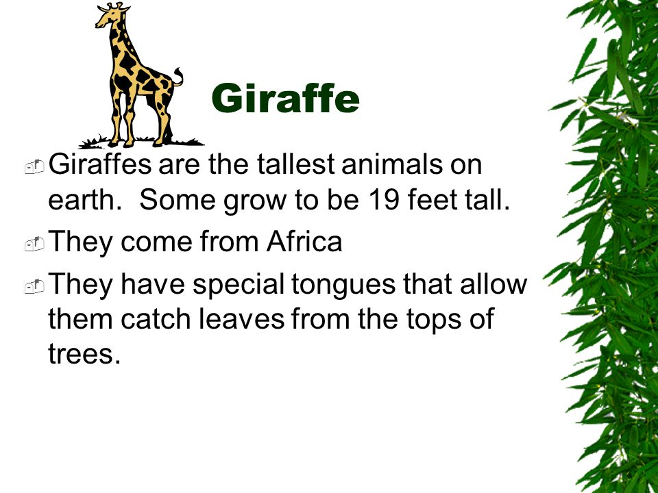 Giraffe Giraffes are the tallest animals on earth. Some grow to be 19 feet tall. They come from Africa.