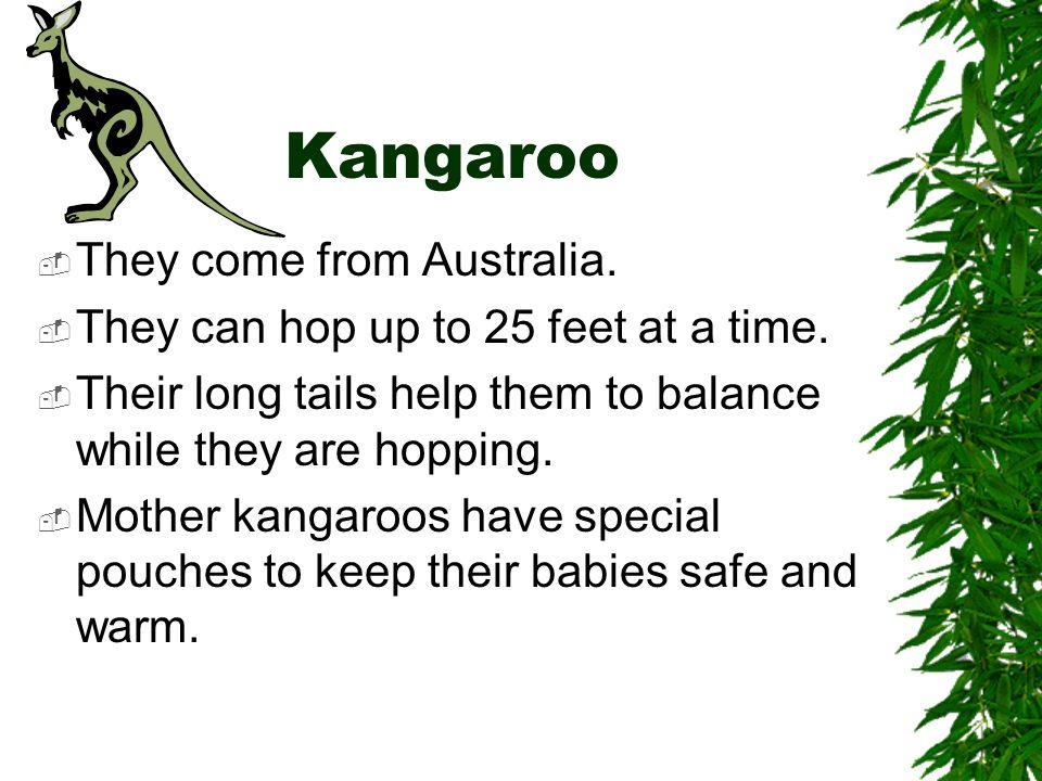 Kangaroo They come from Australia.