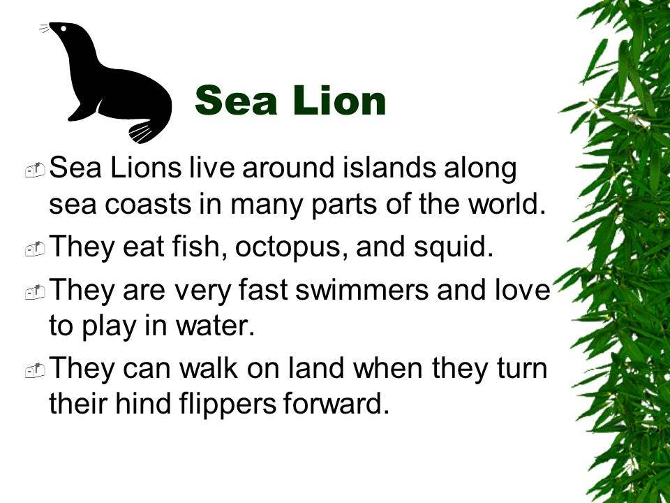 Sea Lion Sea Lions live around islands along sea coasts in many parts of the world. They eat fish, octopus, and squid.