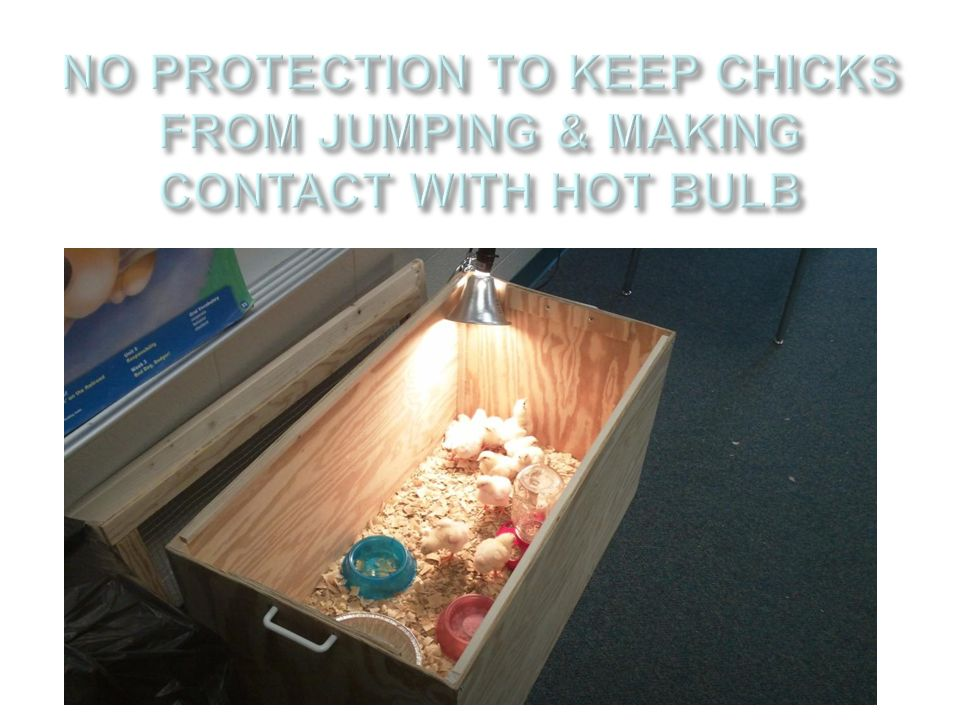 NO PROTECTION TO KEEP CHICKS FROM JUMPING & MAKING CONTACT WITH HOT BULB