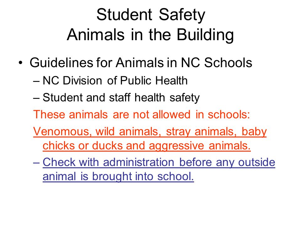 Student Safety Animals in the Building