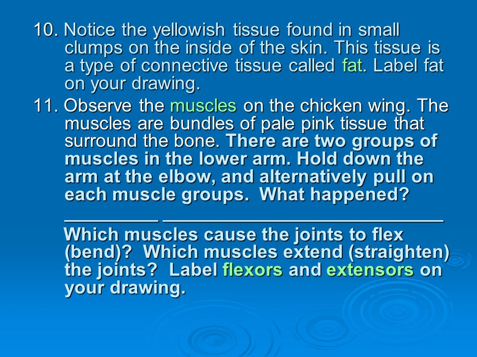 10. Notice the yellowish tissue found in small clumps on the inside of the skin. This tissue is a type of connective tissue called fat. Label fat on your drawing.