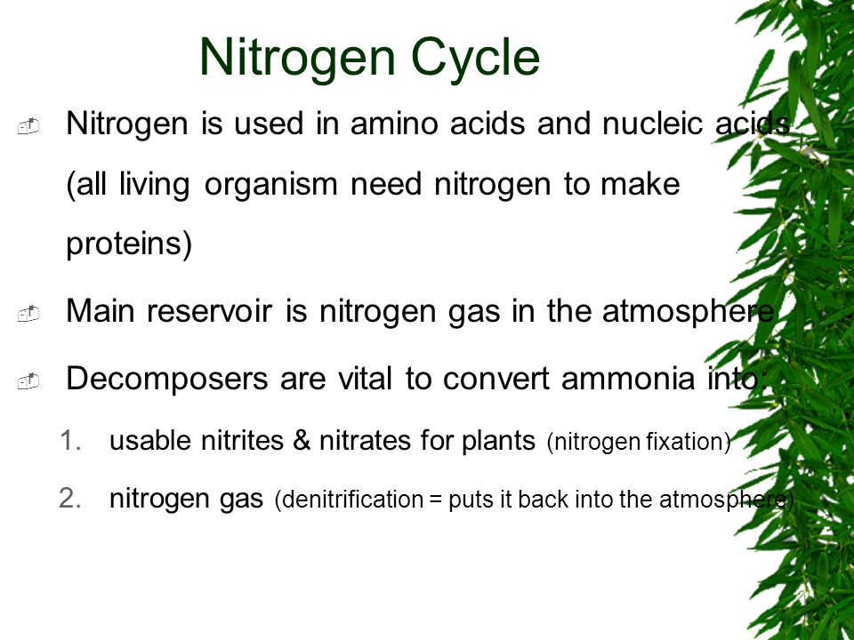 Nitrogen Cycle Nitrogen is used in amino acids and nucleic acids (all living organism need nitrogen to make proteins)