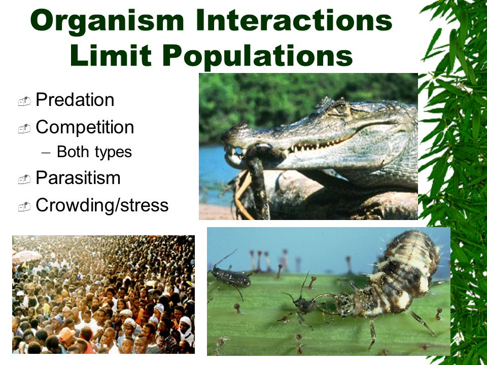 Organism Interactions Limit Populations