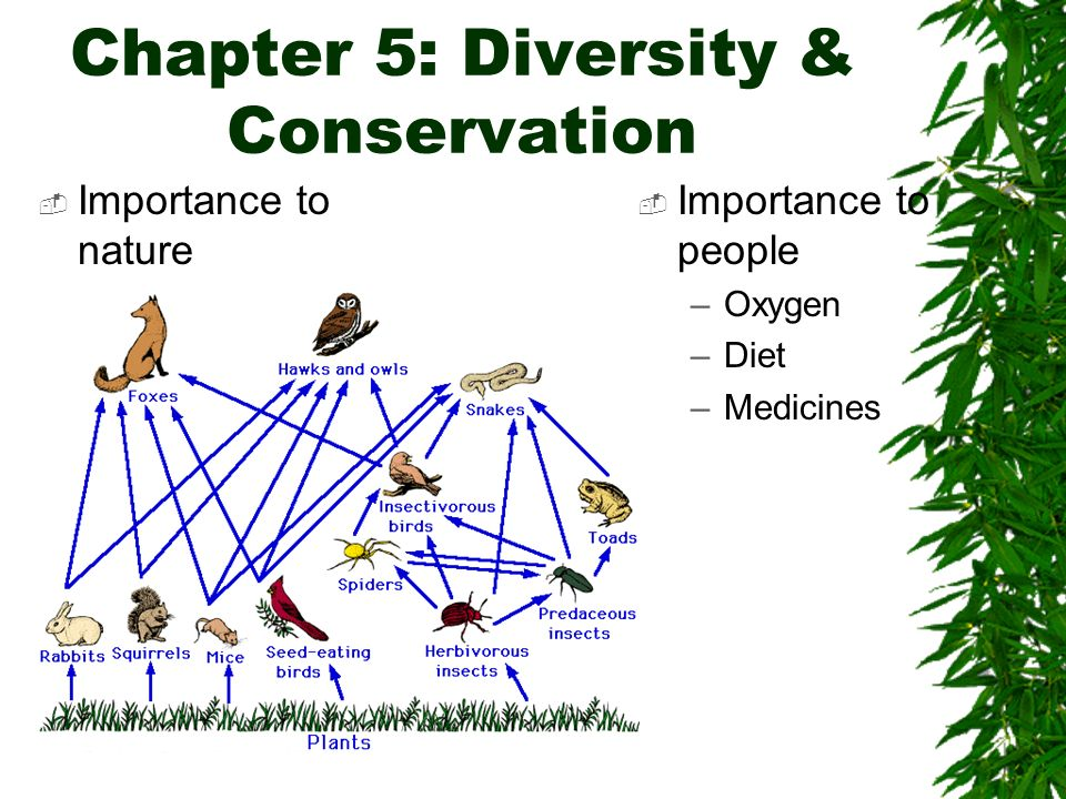 Chapter 5: Diversity & Conservation