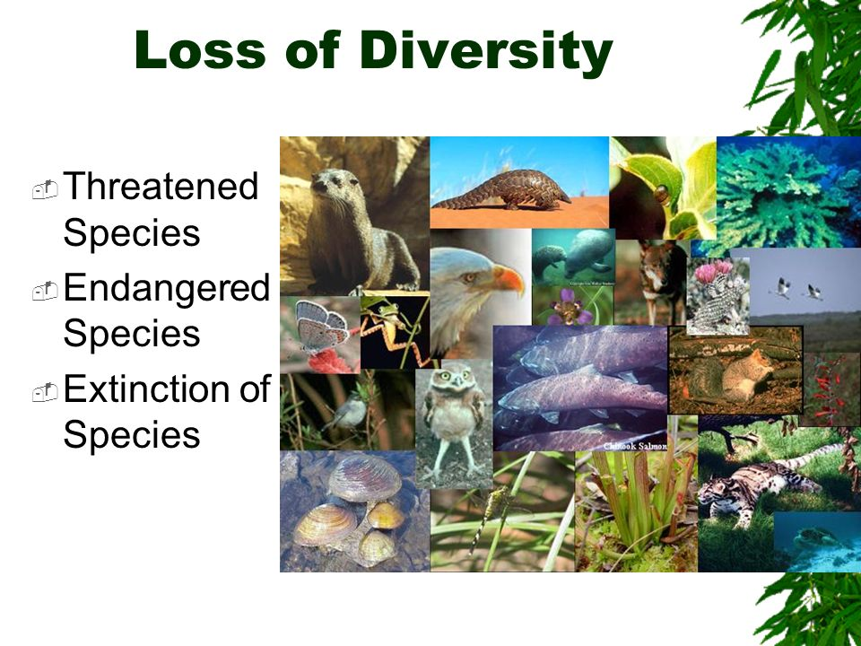 Loss of Diversity Threatened Species Endangered Species