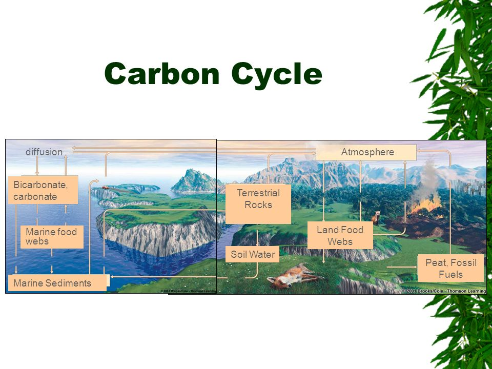 Carbon Cycle diffusion Atmosphere Bicarbonate, carbonate Terrestrial
