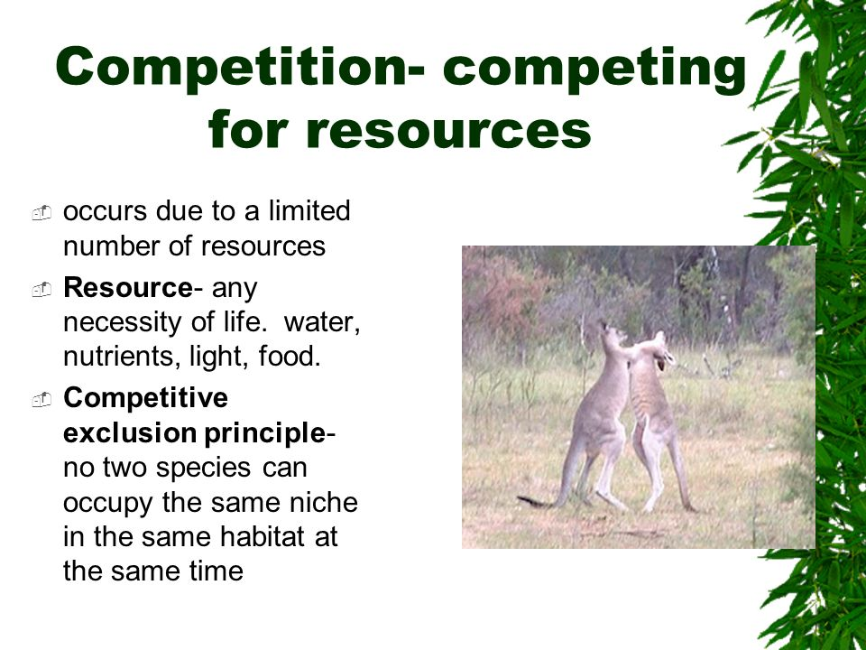 Competition- competing for resources