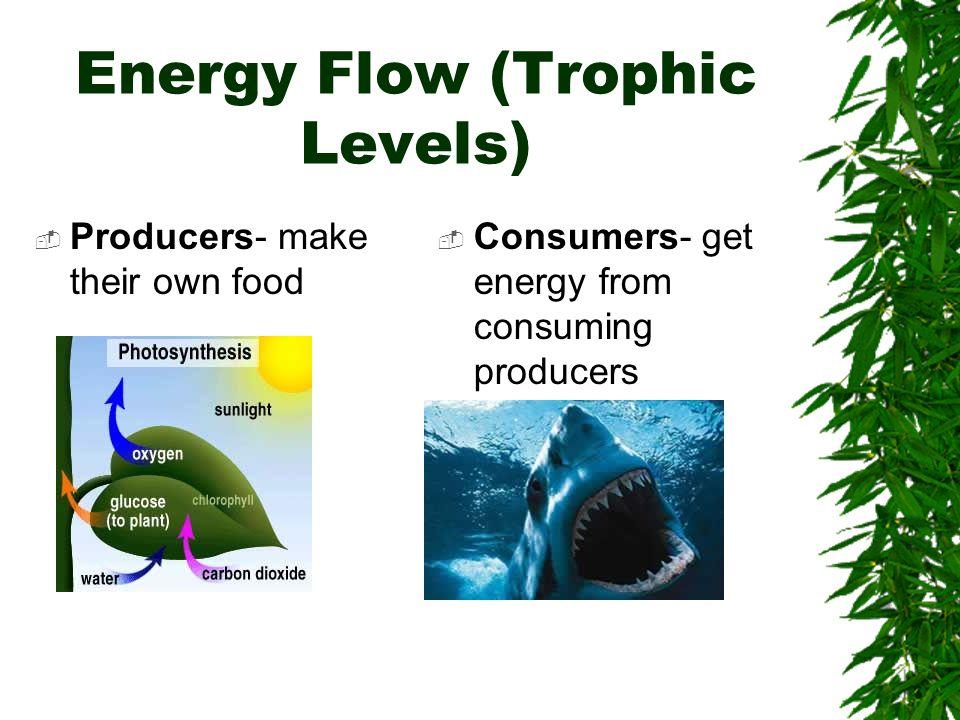 Energy Flow (Trophic Levels)