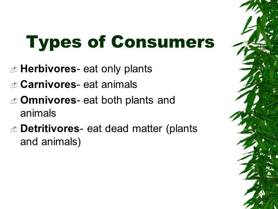 Types of Consumers Herbivores- eat only plants Carnivores- eat animals