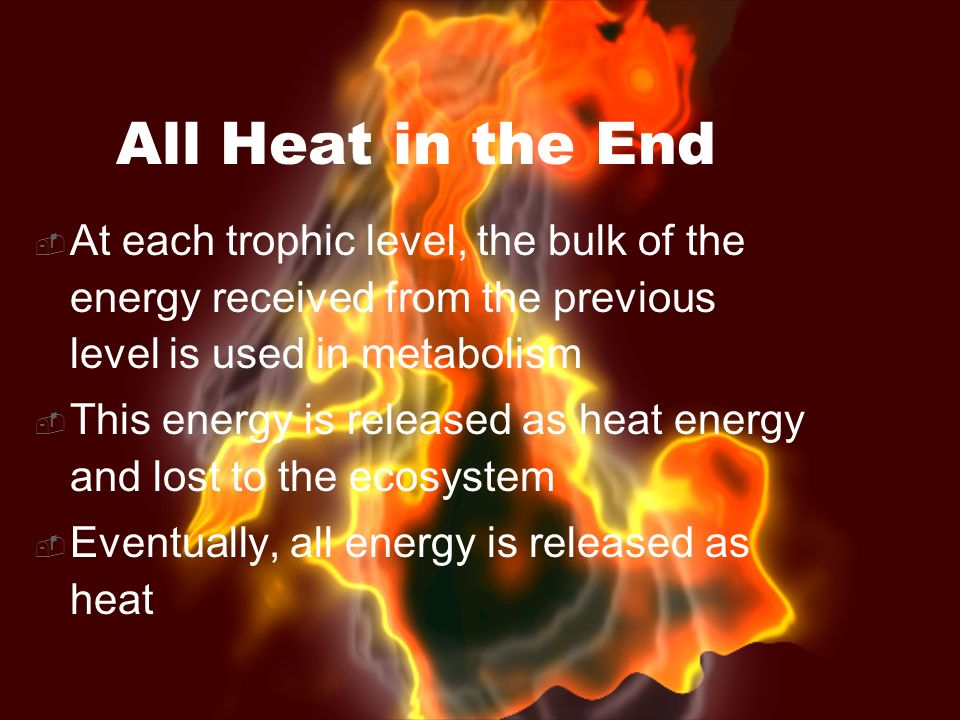 All Heat in the End At each trophic level, the bulk of the energy received from the previous level is used in metabolism.