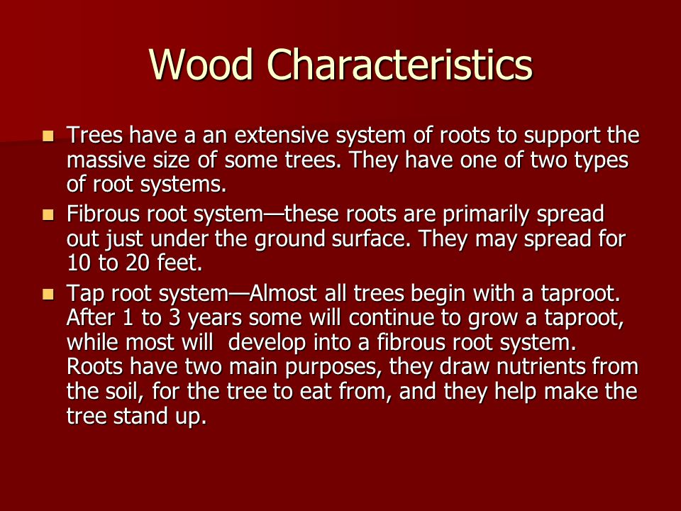 Wood Characteristics Trees have a an extensive system of roots to support the massive size of some trees. They have one of two types of root systems.
