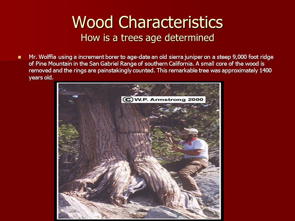 Wood Characteristics How is a trees age determined