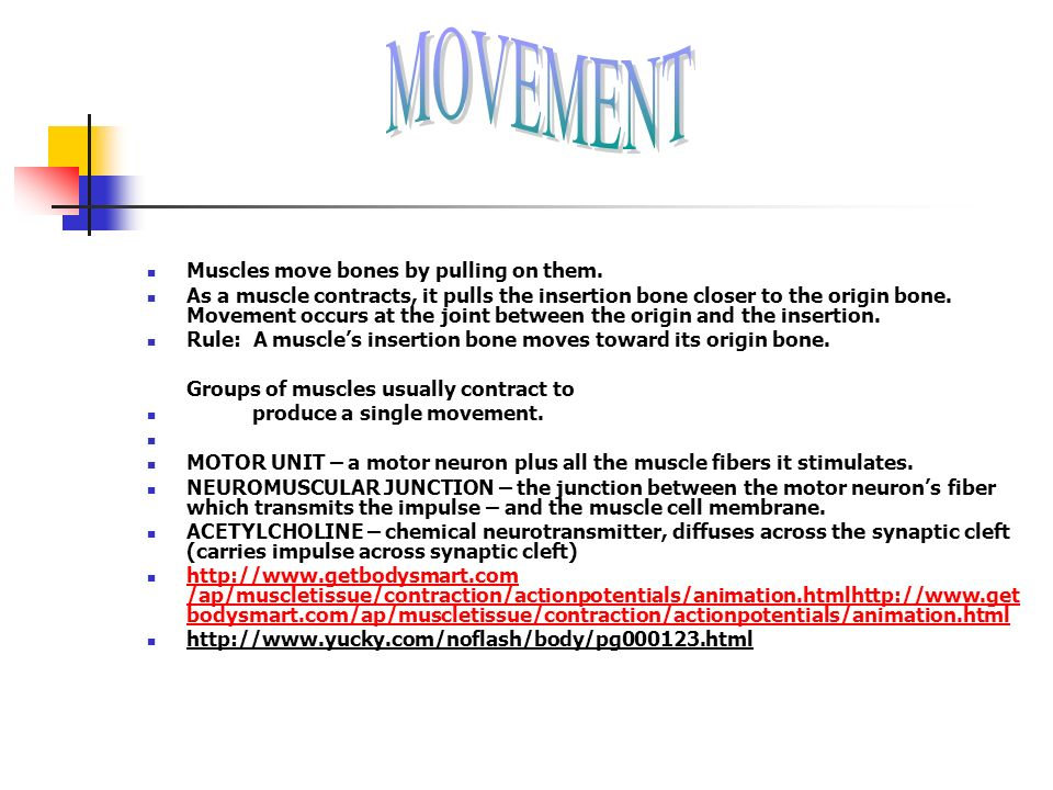 MOVEMENT Muscles move bones by pulling on them.