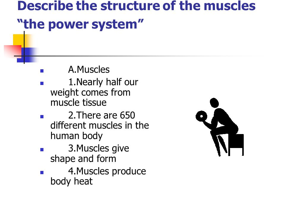 Describe the structure of the muscles the power system