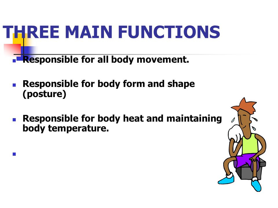 THREE MAIN FUNCTIONS Responsible for all body movement.
