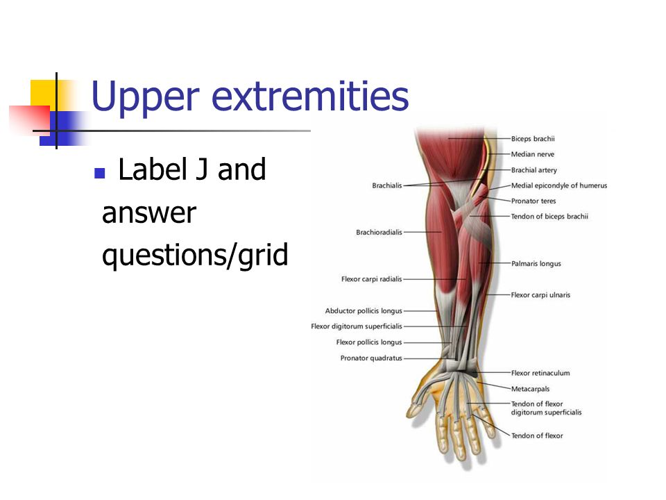 Upper extremities Label J and answer questions/grid