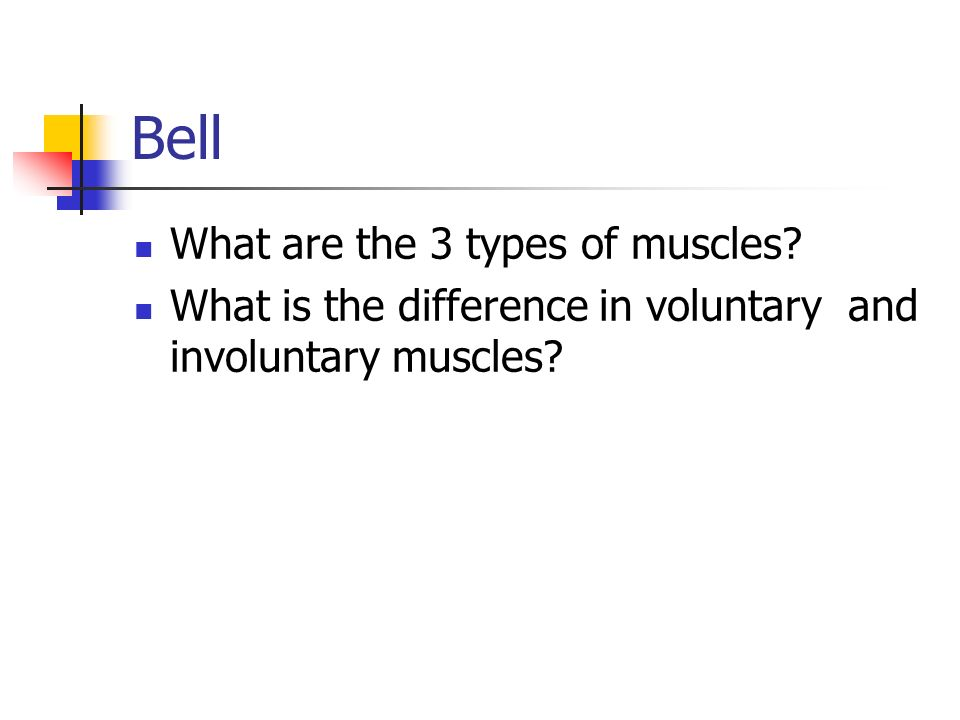 Bell What are the 3 types of muscles