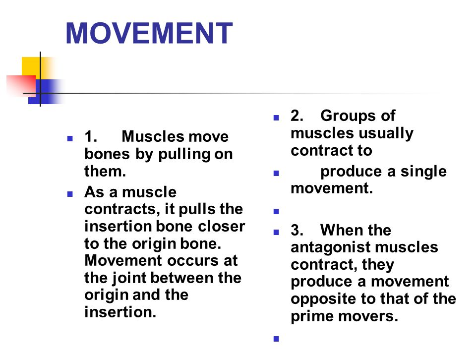 MOVEMENT 1. Muscles move bones by pulling on them.