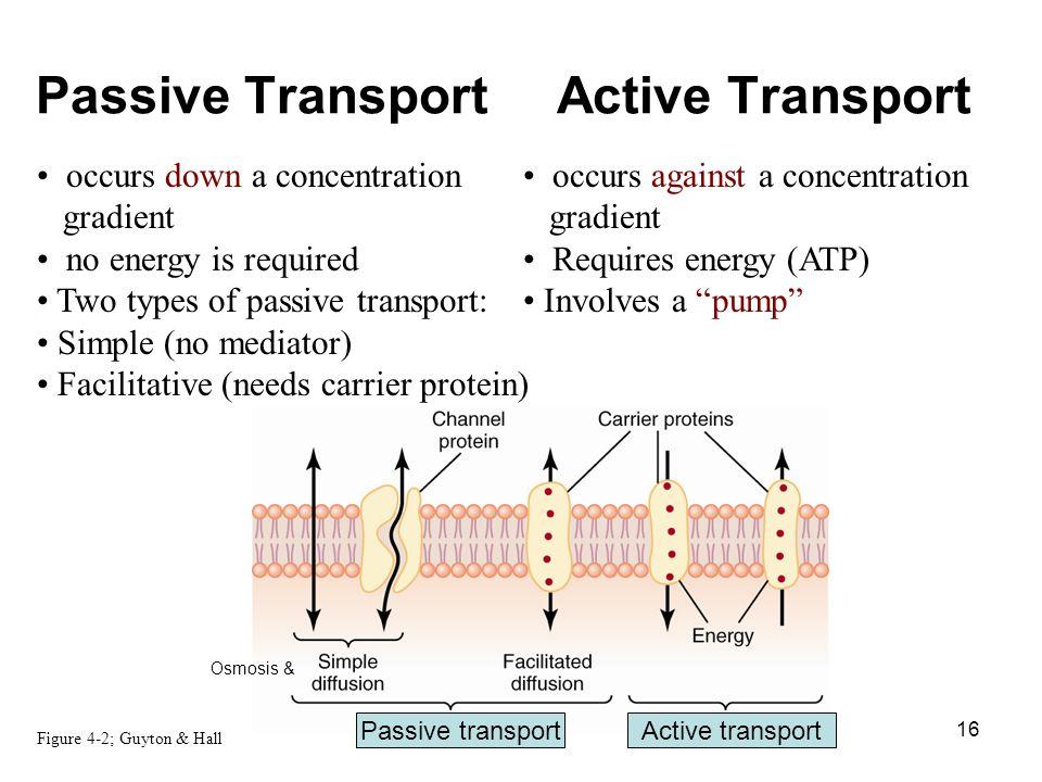 Active Transport And Passive Transport Venn Diagram Ukranochi