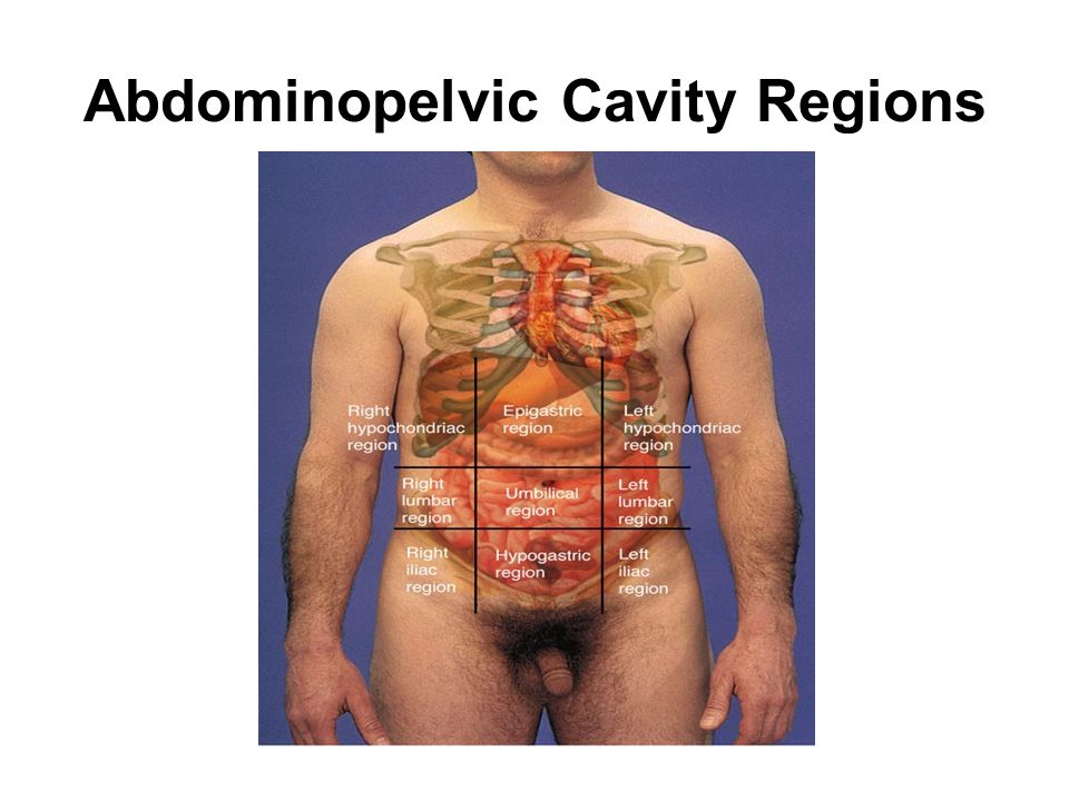 Abdominopelvic Cavity Regions
