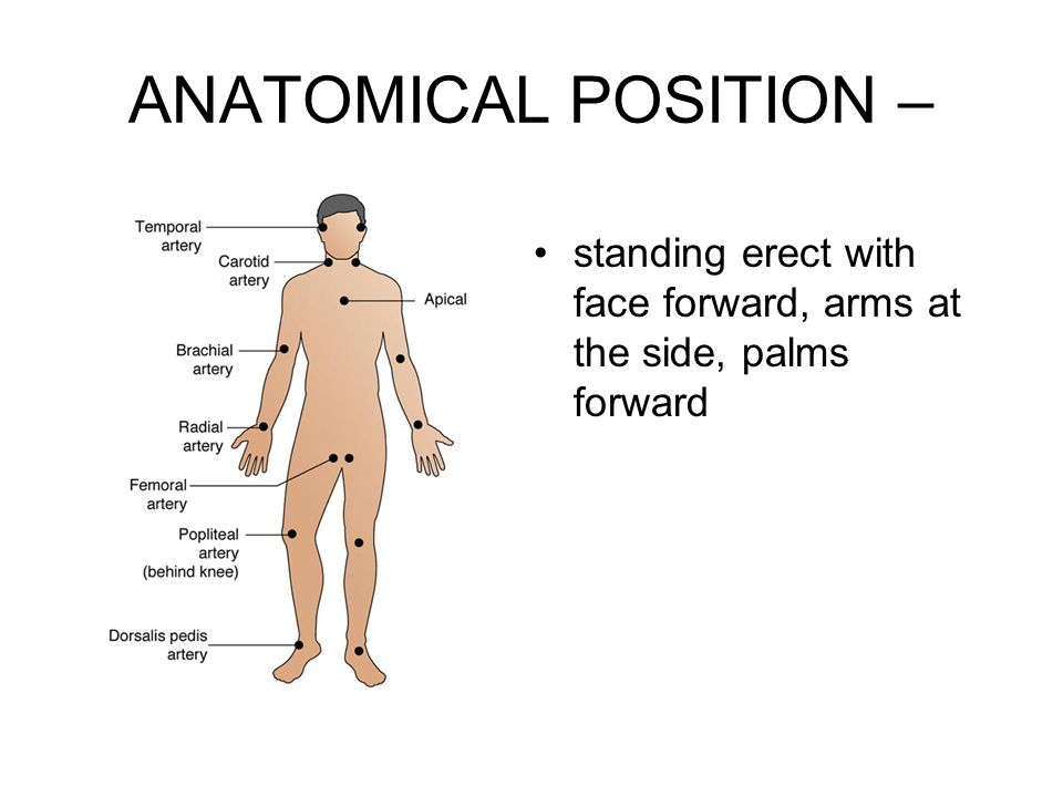 ANATOMICAL POSITION – standing erect with face forward, arms at the side, palms forward