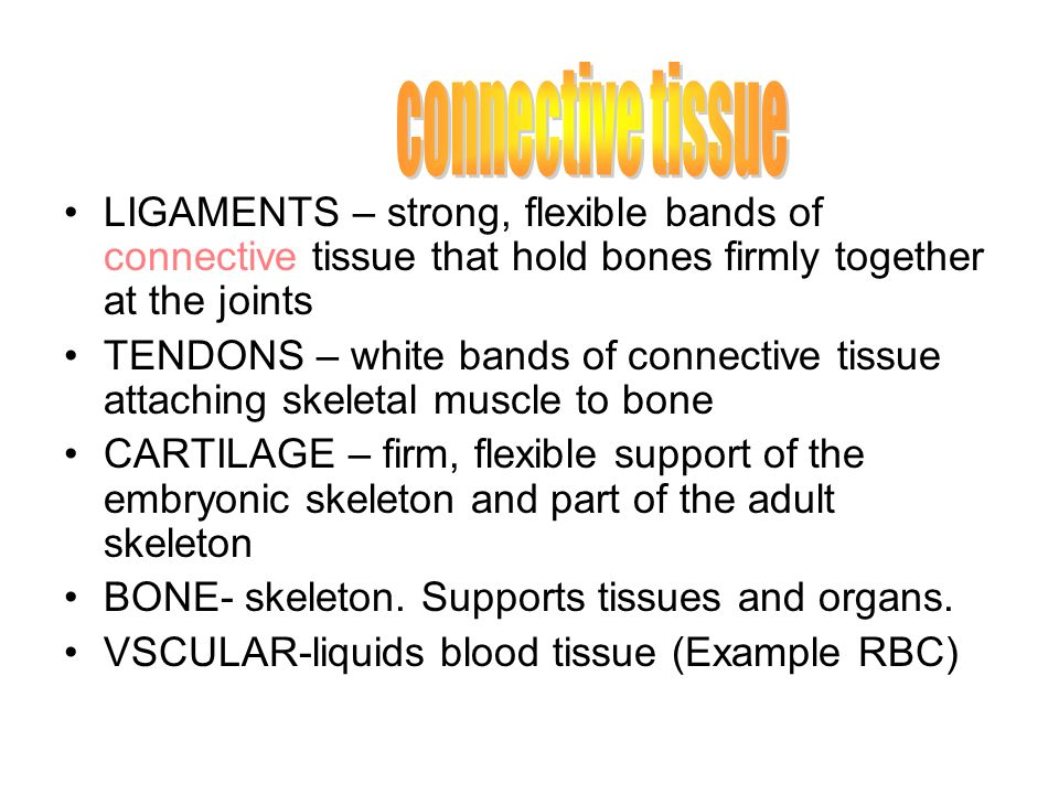 connective tissue LIGAMENTS – strong, flexible bands of connective tissue that hold bones firmly together at the joints.