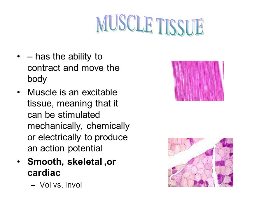 MUSCLE TISSUE – has the ability to contract and move the body