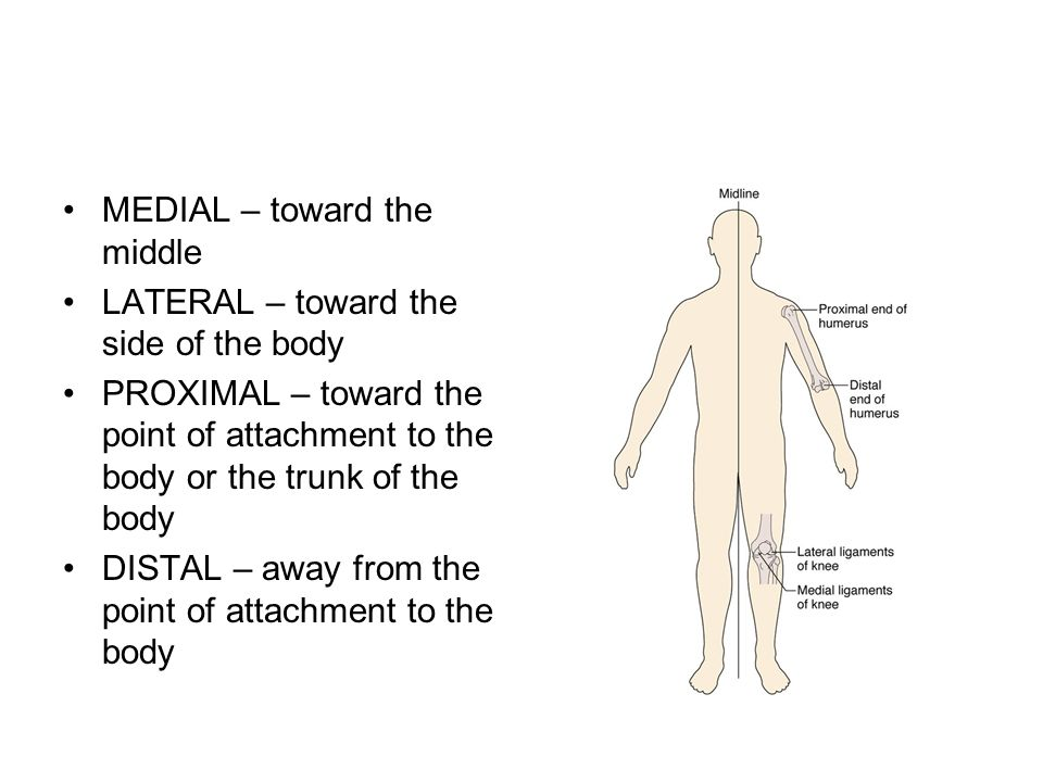 MEDIAL – toward the middle