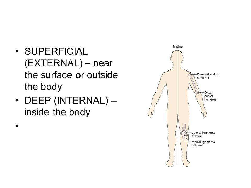 SUPERFICIAL (EXTERNAL) – near the surface or outside the body