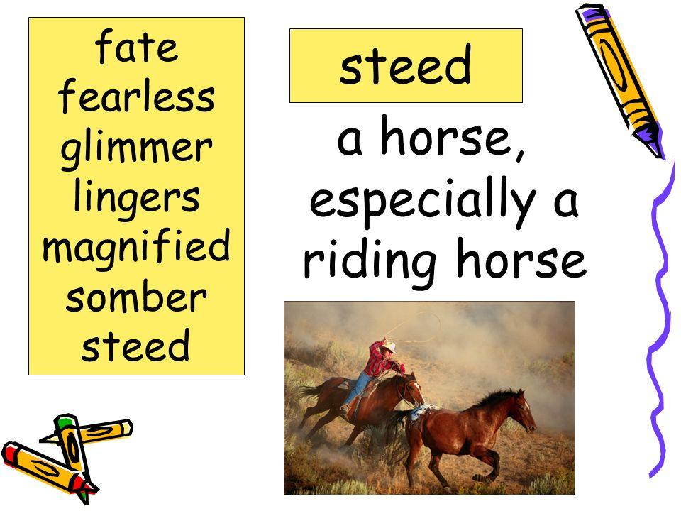 a horse, especially a riding horse