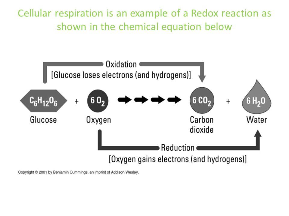 CELLULAR RESPIRATION BIOLOGY IB/ SL Option C ppt download
