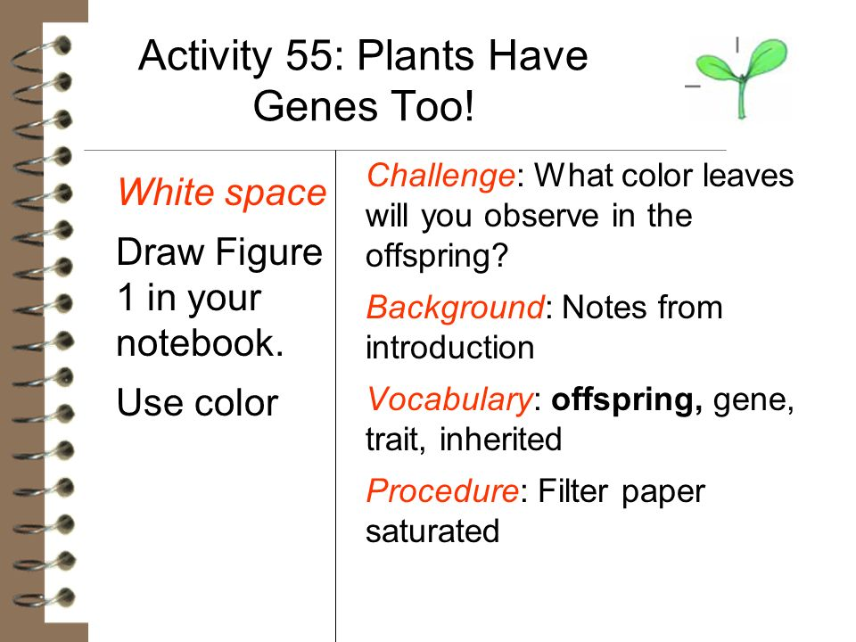 Activity 55: Plants Have Genes Too!