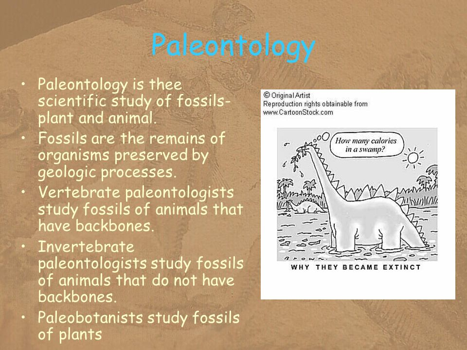 Paleontology Paleontology is thee scientific study of fossils- plant and animal.