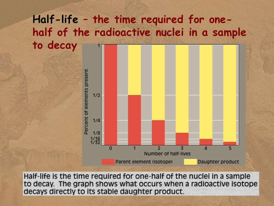 Half-life – the time required for one-half of the radioactive nuclei in a sample to decay