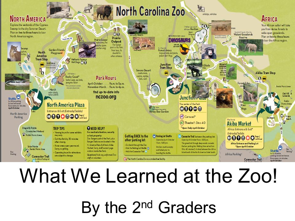 What We Learned at the Zoo!