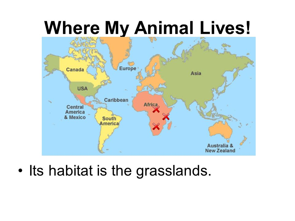 Where My Animal Lives! Its habitat is the grasslands.