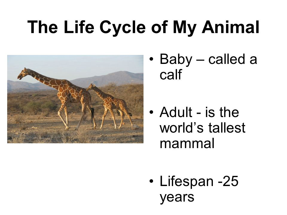 The Life Cycle of My Animal