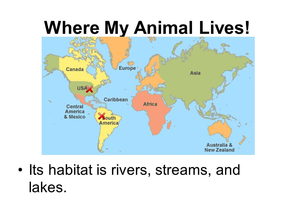 Where My Animal Lives! Its habitat is rivers, streams, and lakes.