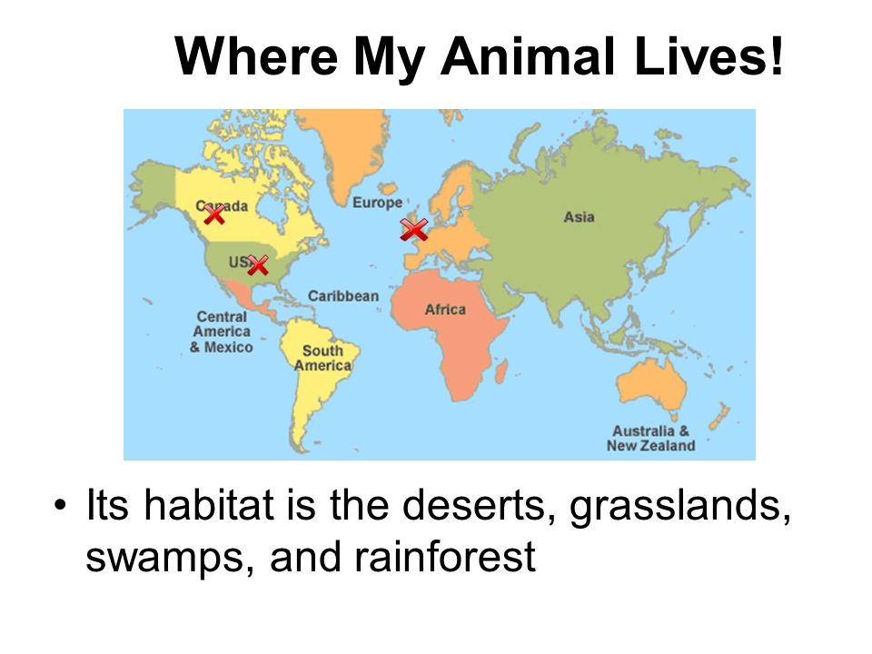 Where My Animal Lives! Its habitat is the deserts, grasslands, swamps, and rainforest