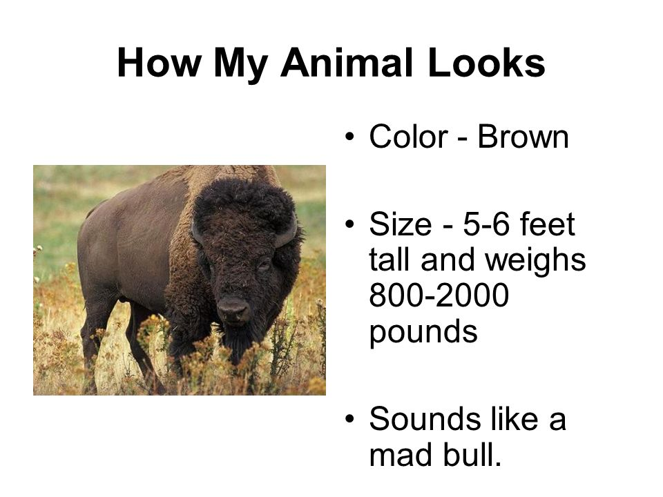 How My Animal Looks Color - Brown