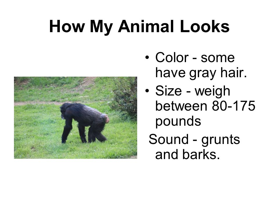 How My Animal Looks Color - some have gray hair.