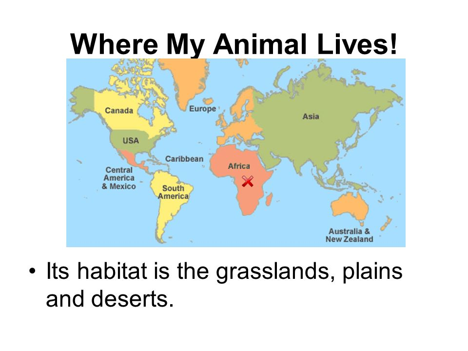 Where My Animal Lives! Its habitat is the grasslands, plains and deserts.